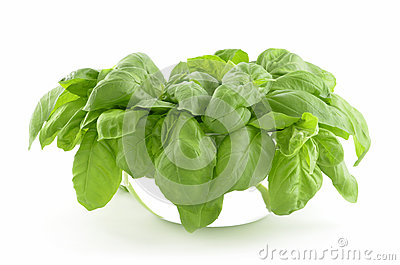 Basil in bowl