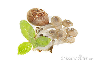 Basil and fungi