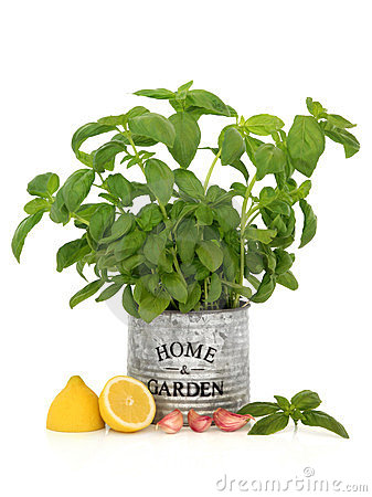 Free Basil Herb, Garlic And Lemon Stock Photos - 23602453