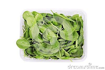 Basil herbs close up in box.