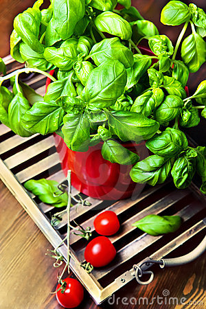 Basil In A Pot With Tomatoes Royalty Free Stock Photos - Image: 21541738