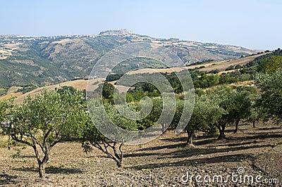 Basilicata (Potenza) - Acerenza