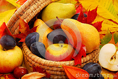 Basket of autumn fruits