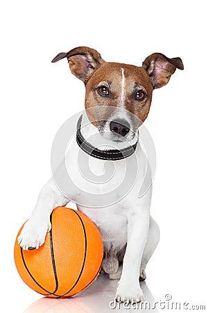 Basket ball  winner dog