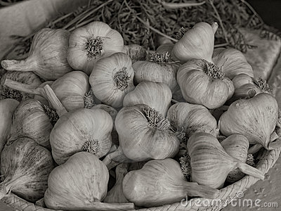 Basket of Dried Garlic5
