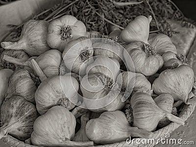 Basket of Dried Garlic5