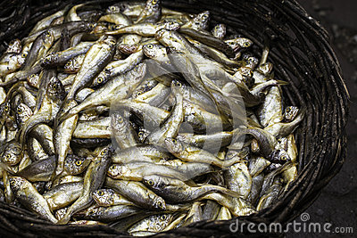A basket of fishes