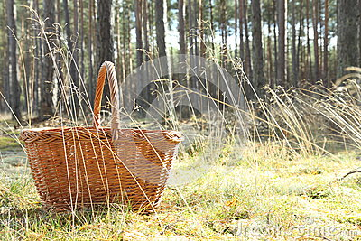 Basket in forest