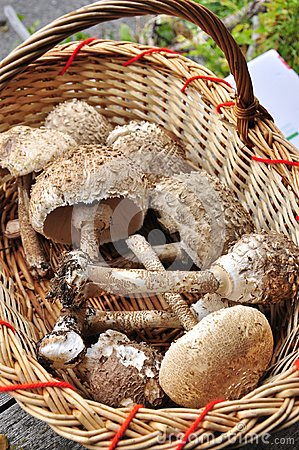 Basket with fresh mushrooms