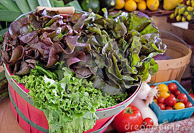 Basket of Fresh Organic Lettuce