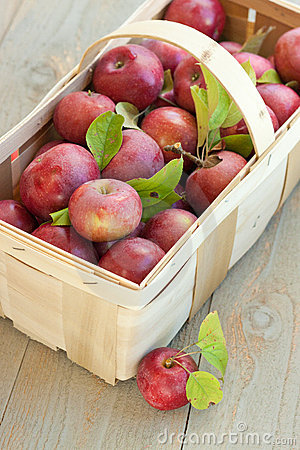 Basket of fresh picked apples