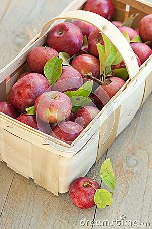 Basket of fresh picked apples
