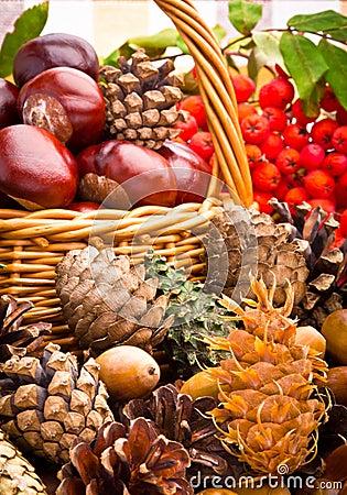 Basket full of autumn acorns, cones and chestnuts