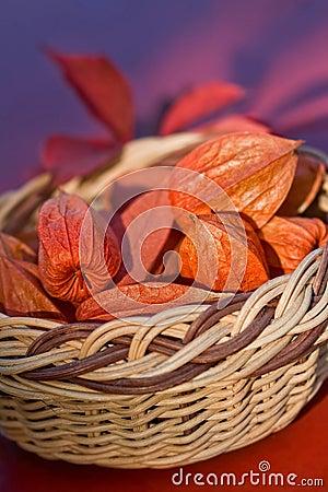 Basket full - Bladder Cherry