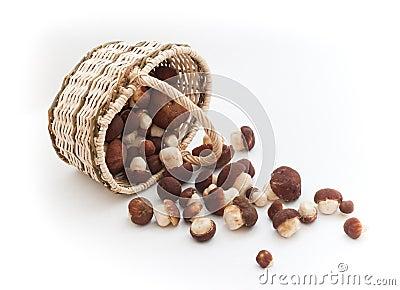 Basket full of cepe mushrooms overturned