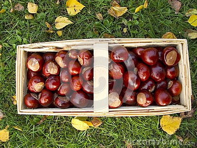 Basket full of chestnuts