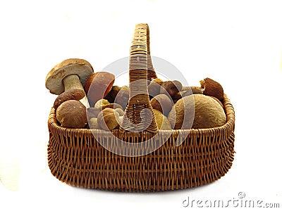 Basket full of mushrooms.