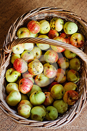 Basket full of wild apples
