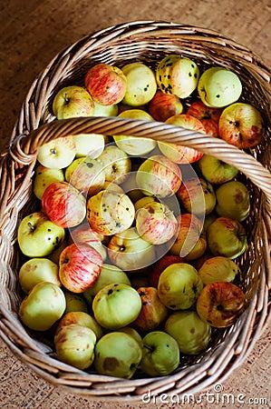 Basket full of wild apples