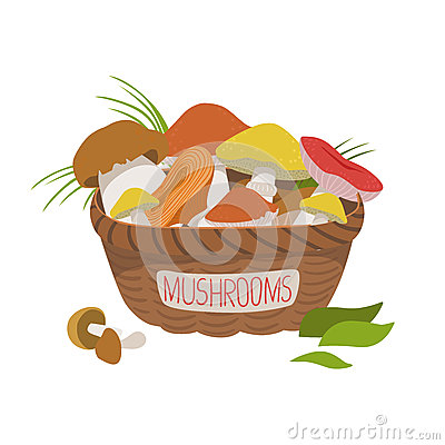Basket full of wild mushrooms. Colorful cartoon illustration Vector Illustration