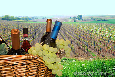 Basket with grapes and wine