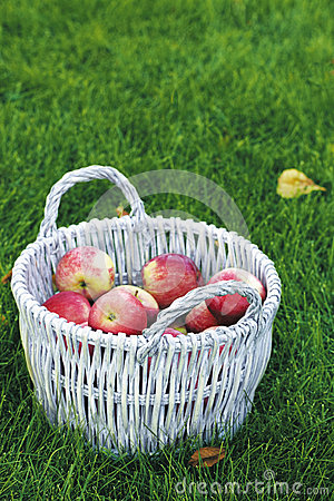 Basket on the grass