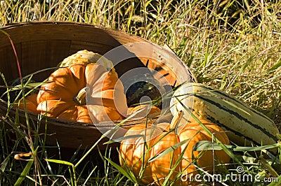 Basket of grouds