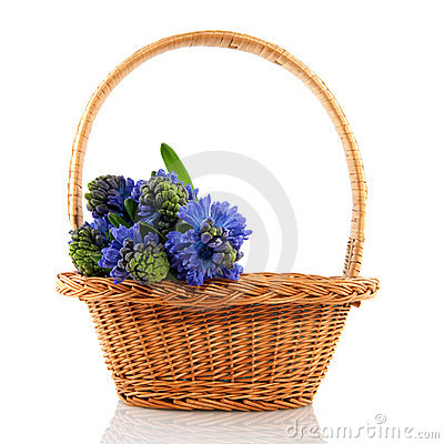 Basket with hyacinths