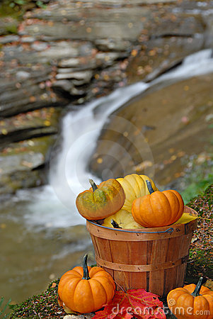 Free Basket Of Pumpkins Royalty Free Stock Photography - 3284097