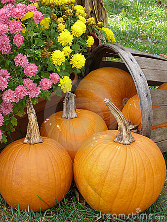 Free Basket Of Pumpkins Royalty Free Stock Photography - 3371737