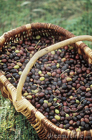 Basket of olives