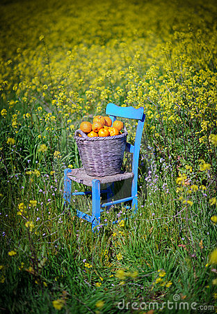 Basket of oranges in yellow flowers 9