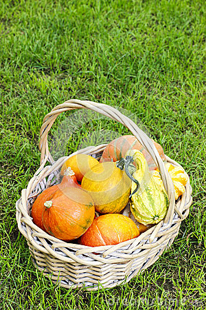 Basket of pumpkins in the garden