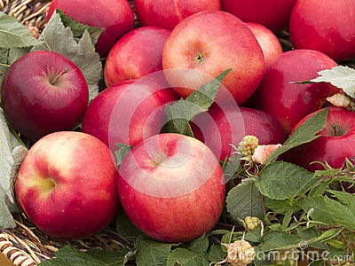 The basket with the red apples