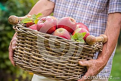 Basket of ripe apples
