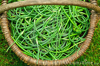 Basket with spring onions