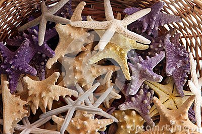 Basket with starfishes