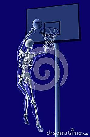 Free Basketball-Anatomy-1 Royalty Free Stock Images - 735739