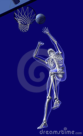Free Basketball Anatomy - From Below Royalty Free Stock Image - 735746