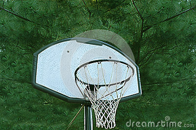 Basketball Goal With Pine Tree Background