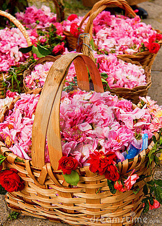 Free Baskets Filled With Roses Royalty Free Stock Image - 23518716