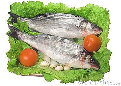 Bass (fish)