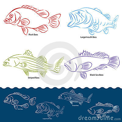 Bass Fish Types