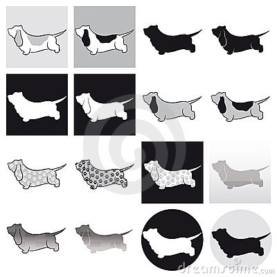 Basset Hound Black & White