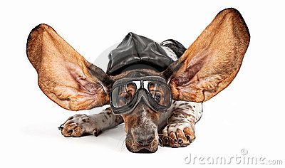 Basset Hound Dog Aviator