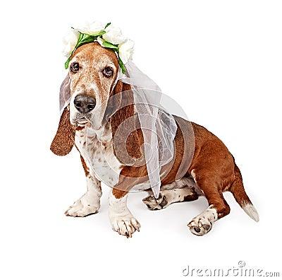 Basset Hound Dog Bride