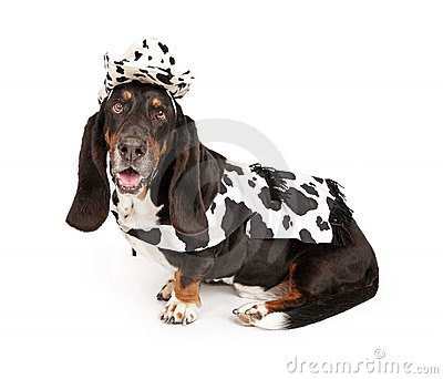 Basset Hound Dog Wearing a Cowboy Outfit