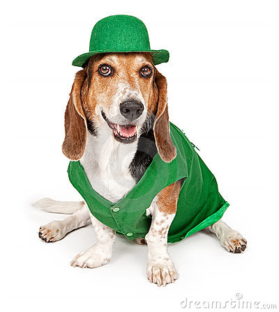 Free Basset Hound Dog Wearing St Patricks Day Outfit Royalty Free Stock Photos - 15218468