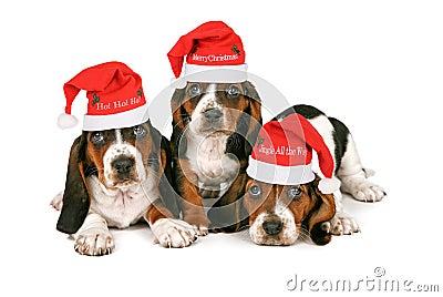 Basset Hound Puppies Wearing Santa Hats