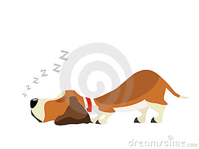 Basset sweet dream